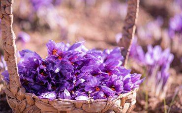 حفظ خواص زعفران با راهکارهای ساده